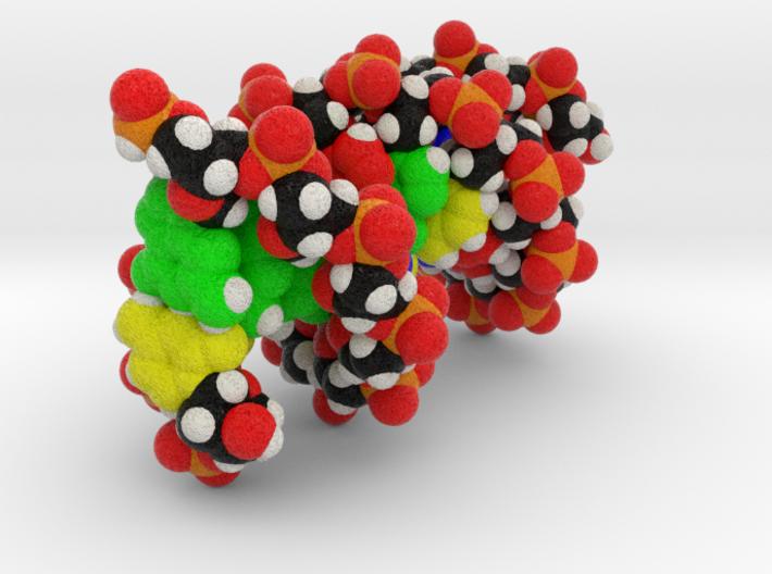 "Custom DNA Molecule Model ""Gary"" 3d printed"