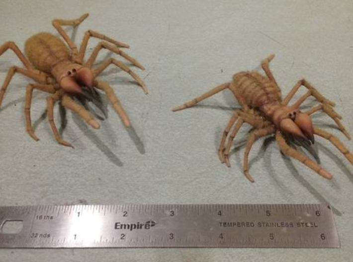 Camel Spider Body 5.5 3d printed