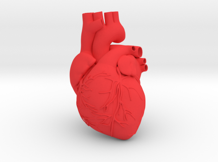 Heart Anatomical 90mm (scale is 1:1) 3d printed