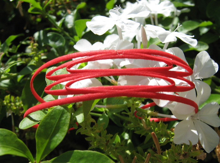 Conchoid 2 Bangle 3d printed
