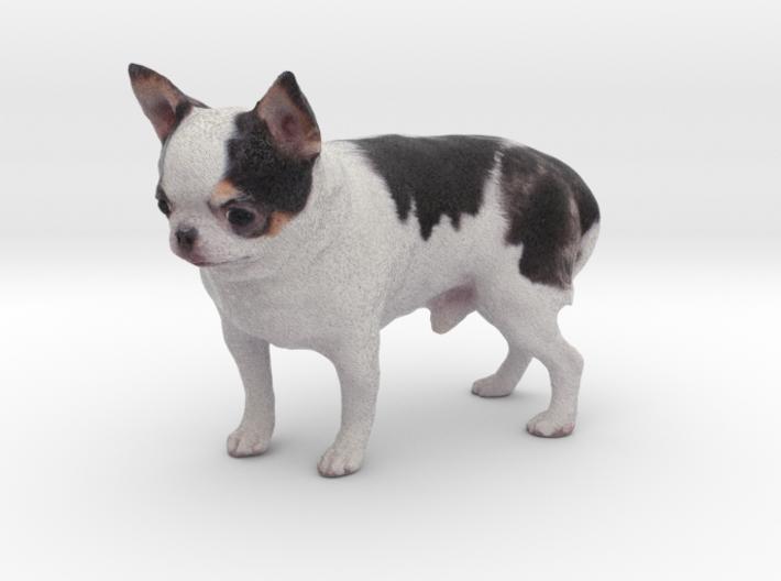 Scanned Chihuahua Dog -889 3d printed