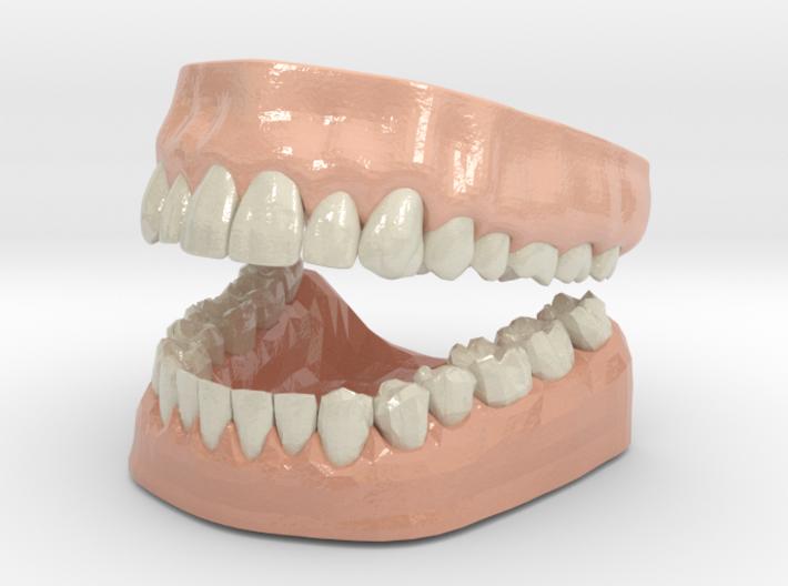 3D Teeth and Gum 3d printed