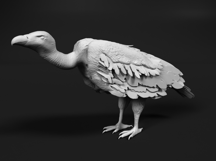 White-Backed Vulture 1:6 Standing 1 3d printed
