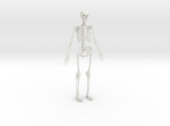 Human Skeleton -1:6 scale (30 cm)