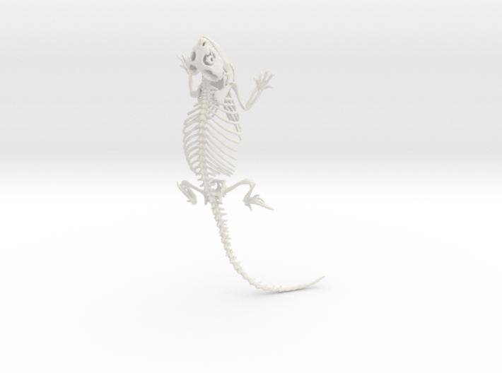 Bearded Dragon Skeleton - 6 Inches 3d printed