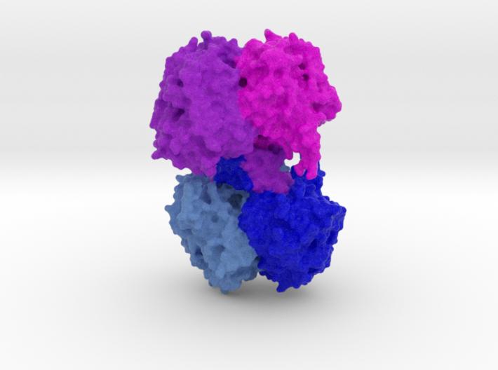 β-Ketothiolase (PhaA) 3d printed
