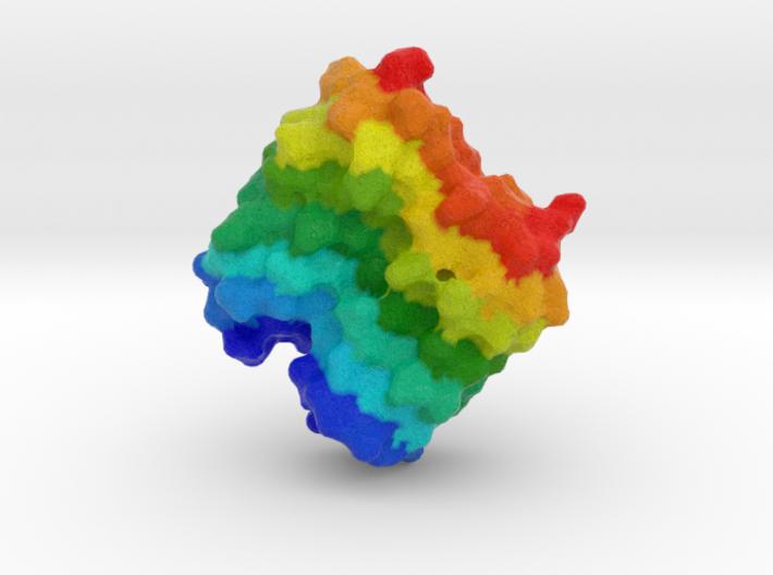 Beetle Antifreeze Protein 3d printed