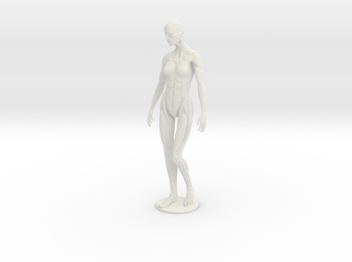 Female form robotic anatomy 20cm 3d printed