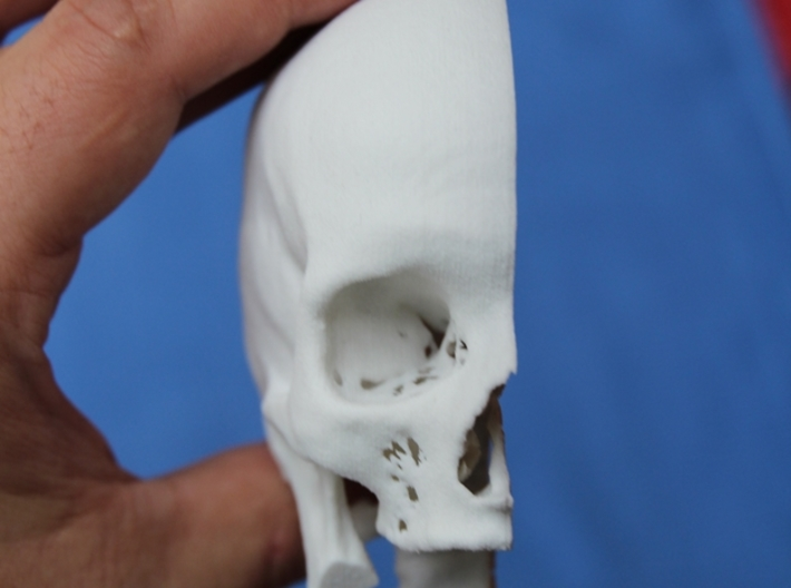 Half skull, half- size, created from CT scan data 3d printed Add a caption...