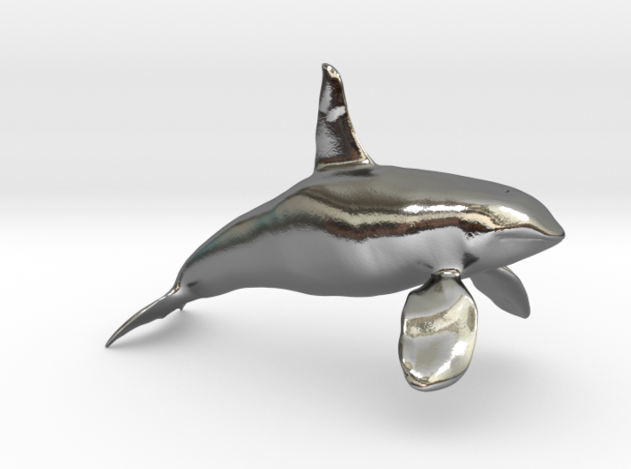 Orca-male-solid 3d printed