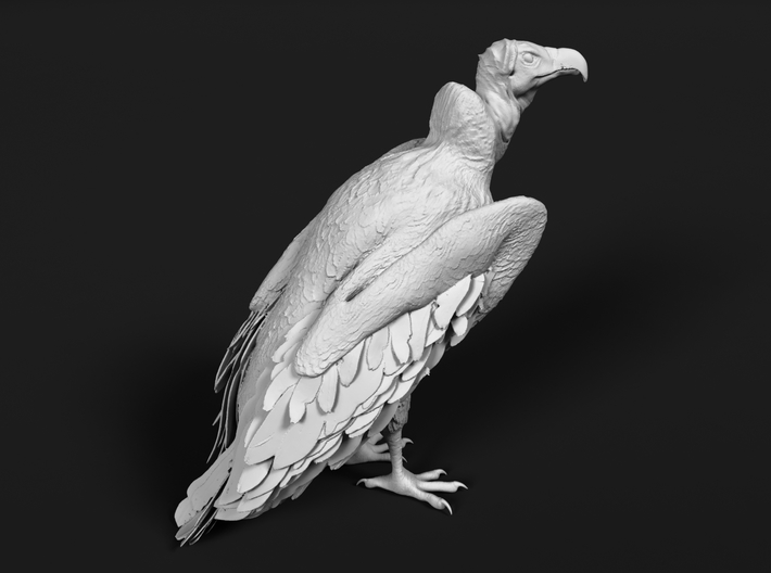 Lappet-Faced Vulture 1:72 Standing 3d printed