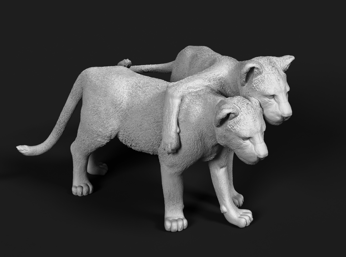 Lion 1:22 Cubs distracted while playing 3d printed