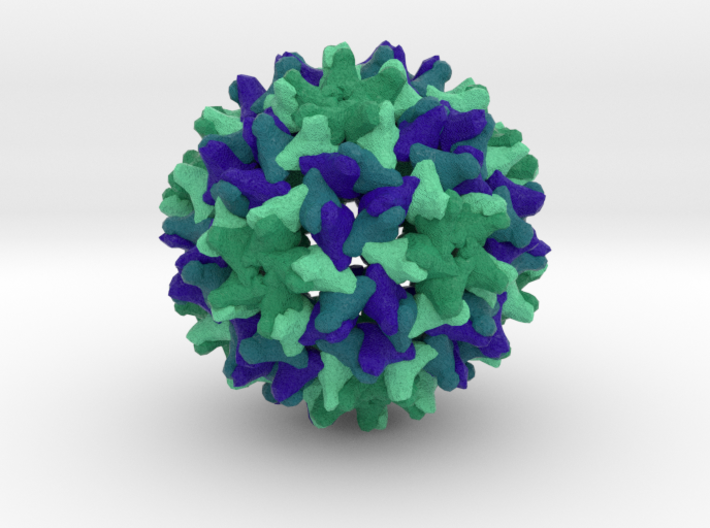 Woodchuck Hepatitis Virus 3d printed