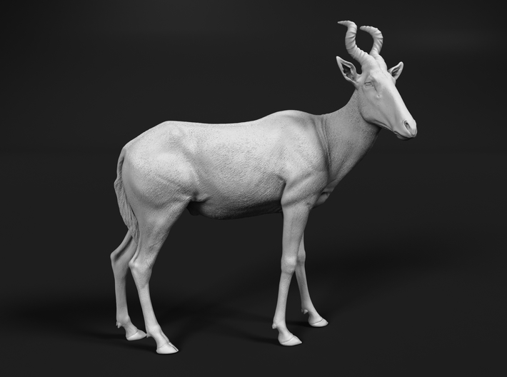 Red Hartebeest 1:25 Standing Male 3d printed