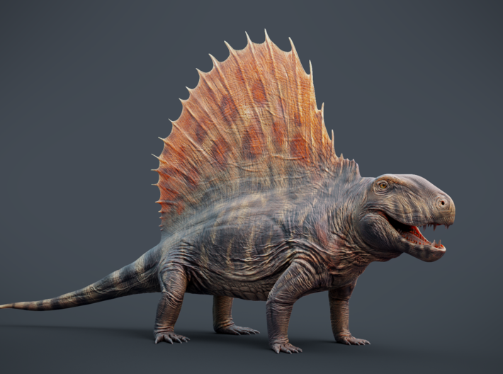 Dimetrodon 1/25 Scale Model 3d printed textured render (texture not included in print)