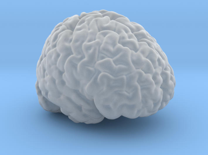 Life Size Brain from MRI 3d printed