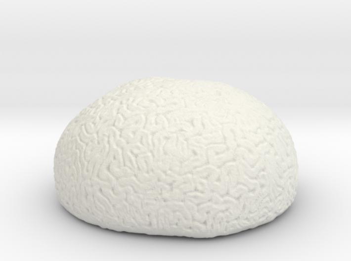 Brain Coral 3d printed