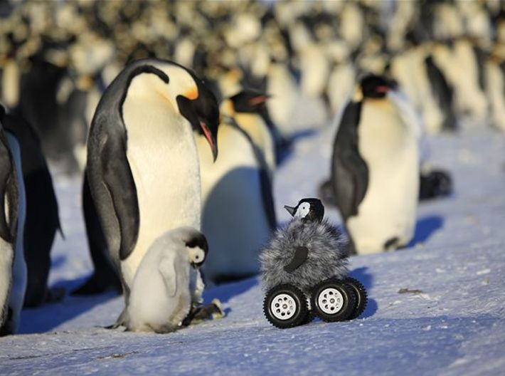 Robo Penguin Reseaching Real Penguins 3d printed the real life peguin