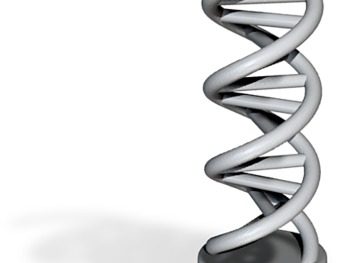 DNA Model 3d printed