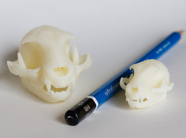 "Mini Cat Skull Sculpture 3d printed Mini and Standard model with an HB pencil for scale. Printed on ""MakerBot: The Replicator"" at the local college. Shapeways prints should look even better since they use high resolution printers."