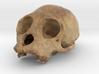 PrimA001 - Cranium Unknown species 3d printed