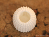 Brain Coral Jewellery Container 3d printed White Strong & Flexible Polished
