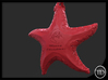 Christmas Starfish 3d printed