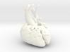 Paediatric Heart 3d printed