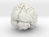 Complete Brain 3d printed