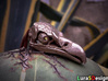 vicious Vulture Skull 3d printed Stainless Steel