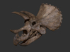 Triceratops skull (1:35 / 1:15 / 1:10) 3d printed