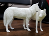North American Gray Wolf 3d printed The other pose may be available soon!