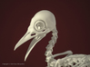 Bare-Fronted Hoodwink Skeleton 3d printed