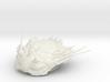 Trilobite - Kettneraspis prescheri 3d printed