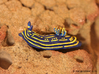 Lani the Nudibranch 3d printed Hand Painted White Strong & Flexible Polished