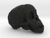 RadioLab Taung Child Skull Via Shootdigital 2014.0 3d printed