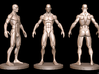 Idealized Male Ecorche Simplified V2 3d printed